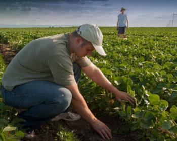 Кабмін збільшив максимальну субсидію фермерам до 41,7 тис. грн