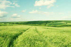 Аграріям збираються компенсувати витрати на вирощування енергетичних рослин